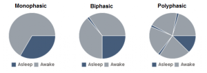 Monophasic, Biphasic, and Polyphasic Sleep Graphs